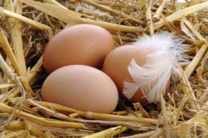 Сколько хранятся яйца в холодильнике?